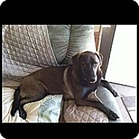 Adopt A Pet :: SOPHIE-FAITHFUL COMPANION!!! - Bluff city, TN