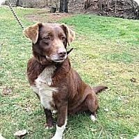 Adopt A Pet :: Shelby - Hazard, KY