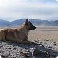 Adopt A Pet :: Mogie - Hamilton, MT