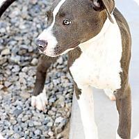 Adopt A Pet :: Leo - Scottsdale, AZ