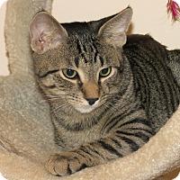 Adopt A Pet :: Sheldon - Raritan, NJ