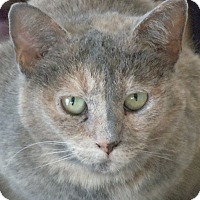 Adopt A Pet :: Lucinda - Jacksonville, NC
