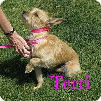 Adopt A Pet :: Terri - Scottsdale, AZ