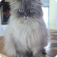 Adopt A Pet :: Big Ben - Davis, CA