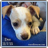 Adopt A Pet :: Dee In Dallas/Ft Worth, Texas - Dallas/Ft. Worth, TX
