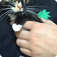 Adopt A Pet :: Sheba - McDonough, GA