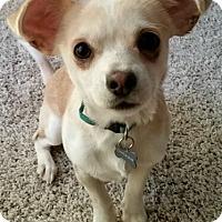 Adopt A Pet :: Charlie - MINNEAPOLIS, KS