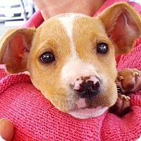 Adopt A Pet :: Gilly - Marina del Rey, CA