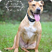 Adopt A Pet :: Kermit - Fort Valley, GA