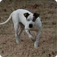 Adopt A Pet :: Beaudreau - Newcastle, OK