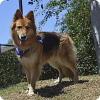 Adopt A Pet :: Leah - Mira Loma, CA