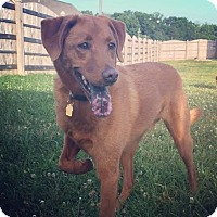 Adopt A Pet :: Brody - Hagerstown, MD