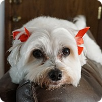 Adopt A Pet :: Maycie - Cotati, CA