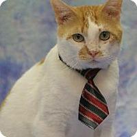 Adopt A Pet :: Oscar The Cat - Richardson, TX