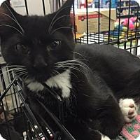 Adopt A Pet :: Skeeter - Whitehall, PA