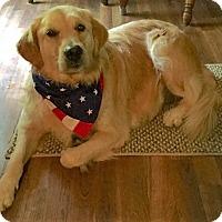 Adopt A Pet :: Geneva - BIRMINGHAM, AL
