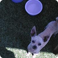 Adopt A Pet :: Chino - Chula Vista, CA