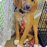 Adopt A Pet :: Trixie - Rexford, NY