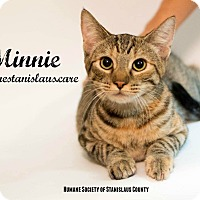 Domestic Shorthair Kitten for adoption in Modesto, California - Minnie