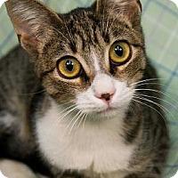 Adopt A Pet :: Maggiore - New Orleans, LA