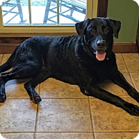 Adopt A Pet :: Mooch - Woodstock, GA