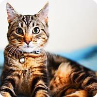 Adopt A Pet :: Zack - Xenia, OH