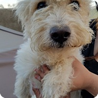Adopt A Pet :: Loofa - Apple Valley, CA