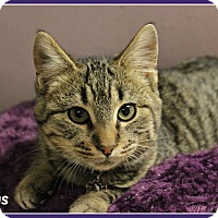 Adopt A Pet :: Boggs - New Richmond,, WI