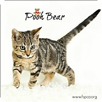 Adopt A Pet :: Pooh Bear - Troy, VA
