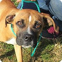Adopt A Pet :: Roxie - Reeds Spring, MO