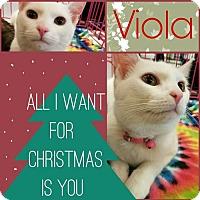Adopt A Pet :: Viola - Grand Blanc, MI