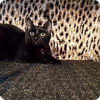 Adopt A Pet :: Midnight - Hamilton, ON