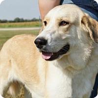 Adopt A Pet :: Ginny - LaHarpe, KS