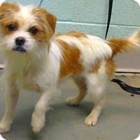 Adopt A Pet :: Pita - adopted - Decatur, GA