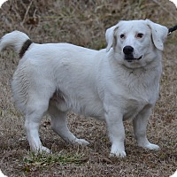 Adopt A Pet :: Sherman - Lebanon, MO