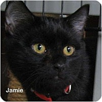 Adopt A Pet :: Jamie - Portland, OR