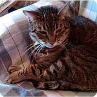 Adopt A Pet :: Beans - Erie, PA