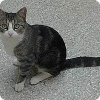 Adopt A Pet :: Zazzles - Danbury, CT
