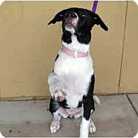 Adopt A Pet :: Sachi - Scottsdale, AZ