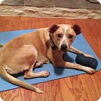 Adopt A Pet :: Sola - Austin, TX