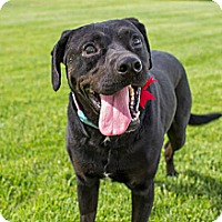 Adopt A Pet :: Titus - West Richland, WA