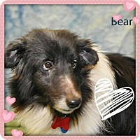 Adopt A Pet :: Bear - COLUMBUS, OH