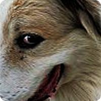 Adopt A Pet :: Concho - Kyle, TX