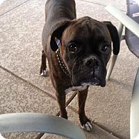 Adopt A Pet :: Gunner-adopted - Phoenix, AZ