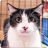 Adopt A Pet :: Bon Jovi - Gainesville, FL