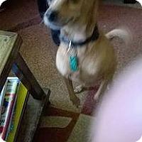 Adopt A Pet :: Lucy - East McKeesport, PA