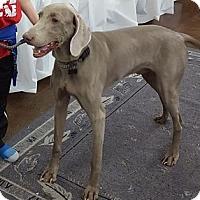 Adopt A Pet :: Max - Grand Haven, MI