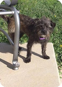 Terrier (Unknown Type, Medium) Mix Dog for adoption in Denver, Colorado - Lucy