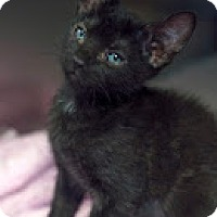Adopt A Pet :: Candy - Manahawkin, NJ