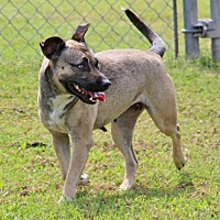 Adopt A Pet :: Keri - Savannah, TN